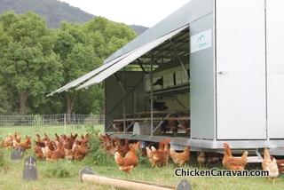 Chicken Caravan 450