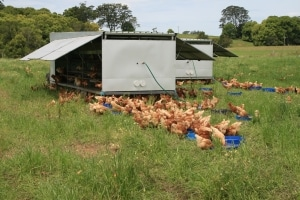 pastued-egg-farming